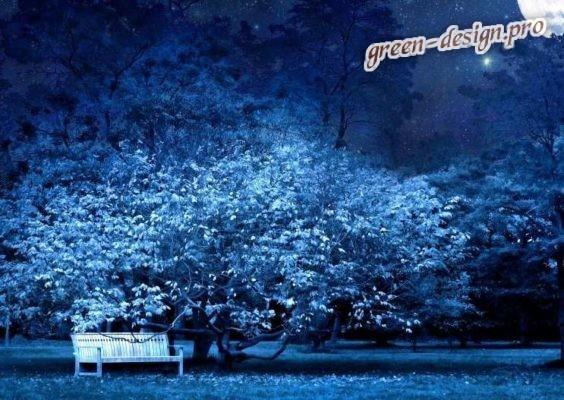 лунный сад