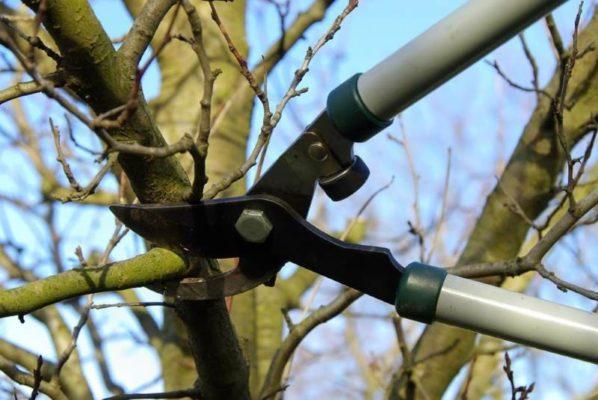 Как и когда обрезать садовые деревья
