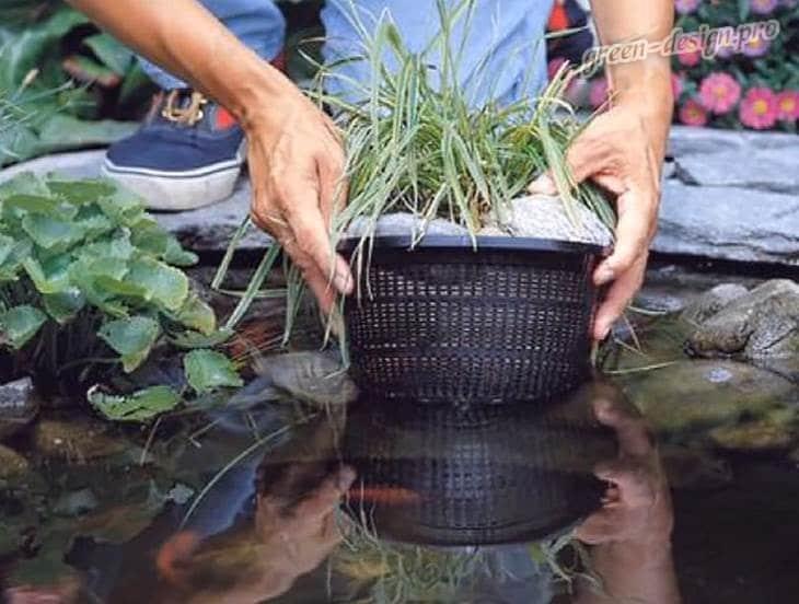 Высадка водной флоры
