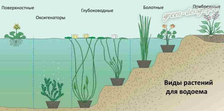 Виды водных растений
