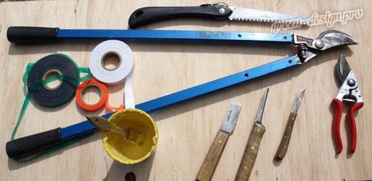 Инструменты для проведения прививки