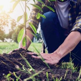 Весенняя подкормка садовых деревьев и кустарников
