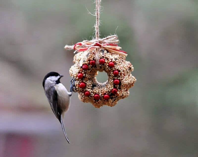 Съедобная кормушка для птиц