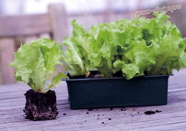 Выбираем контейнер для салата