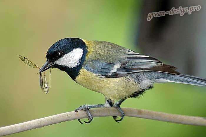 Борьба с вредителями весной в саду - привлекаем птиц