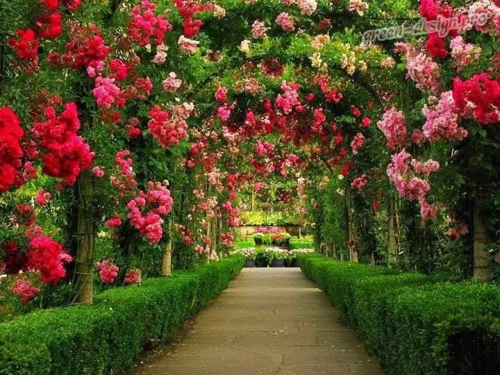 Розарий в саду своими руками: как правильно высаживать розы