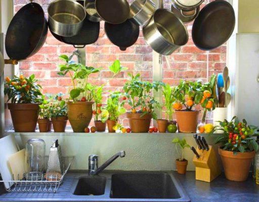 Какие овощи можно вырастить в горшке на подоконнике