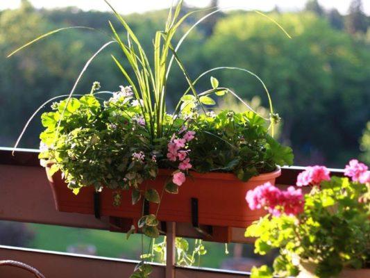 Контейнерное садоводство для начинающих