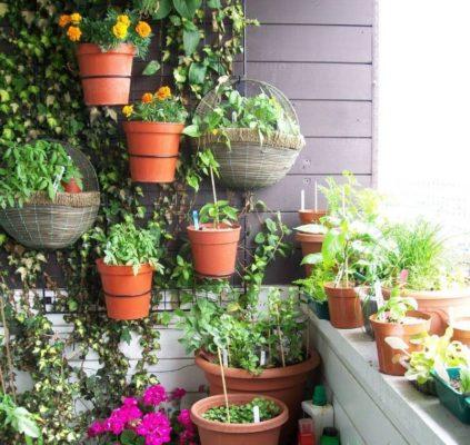 Фото как украсить балкон цветами и растениями