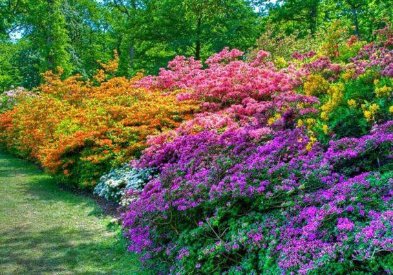 Многолетние кустовые цветы