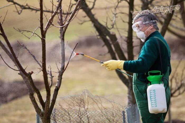 Борьба с вредителями плодовых культур весной
