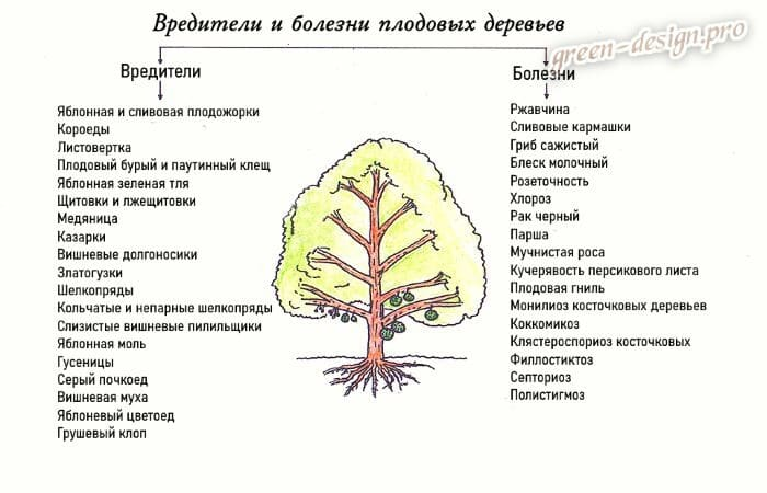 Основные вредители и болезни плодовых