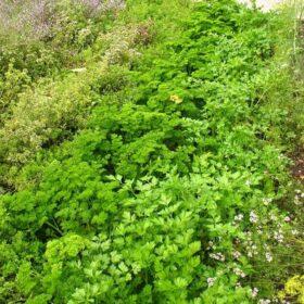 травянистый сад на участке