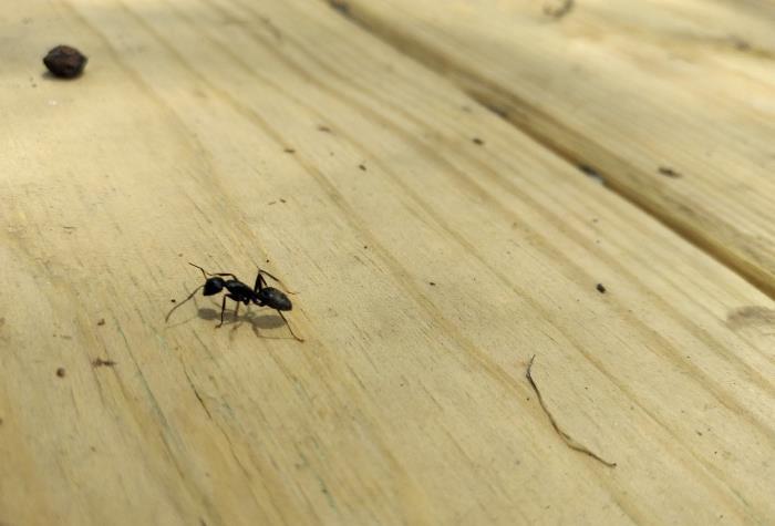 Фот муравья в доме