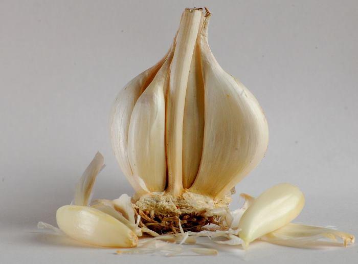 Фото головки чеснока