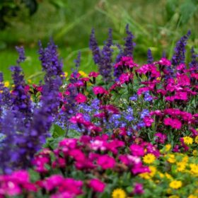 многолетние растения цветущие все лето