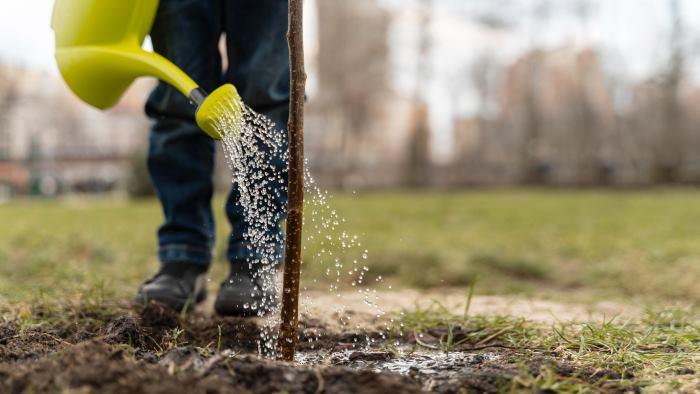 Садовые работы в июле: полив и удобрение