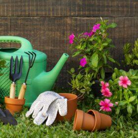Садовые работы в июле